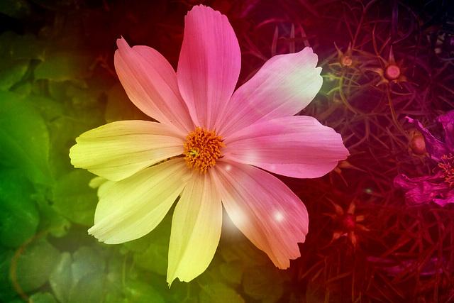 lightfull flower
