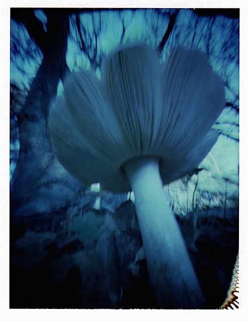 mushroom...