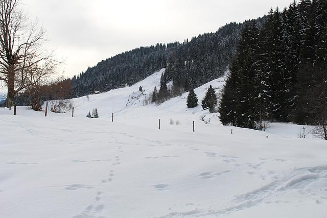 IMG 6424