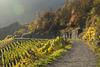 Altenahr - Rotweinwanderweg DSC00887