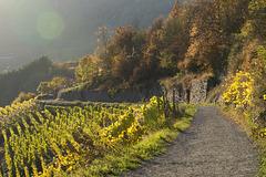 Altenahr - Rotweinwanderweg