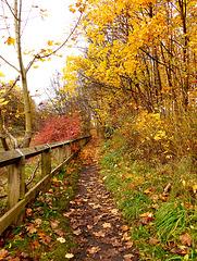 Autumn - better than Spring!