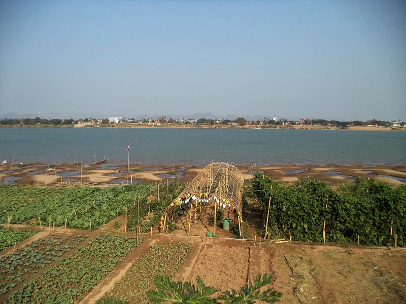 Mekong's gardens / Jardins du Mékong