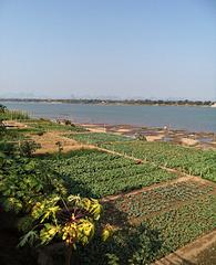 Jardins du Mékong / Mekong's gardens