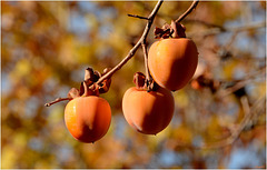 Fruits et Couleurs de Saison !