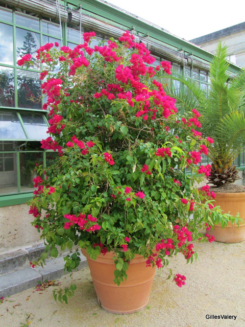 jardin des plantes à Orleans