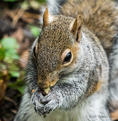 Mmmm, peanut..!!