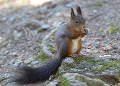 Un écureuil ...