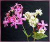 Wiesenblumen mit  Erdhummel... ©UdoSm