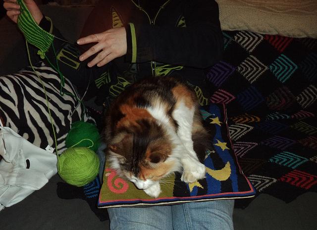 Leeloo and Jennifer's lap
