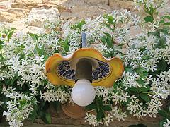 Lampada e fiori