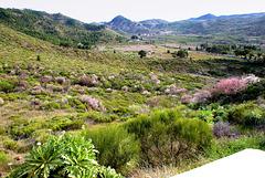 Mandelbäume bei Santiago del Teide. ©UdoSm
