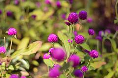 Des fleurs vivaces....