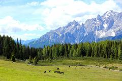 Pferde auf der Nemesalm - HFF  (2 Notes)