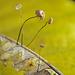 Champignons microscopiques en contre-jour