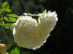 a heart of roses