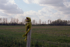 Frog On A Post