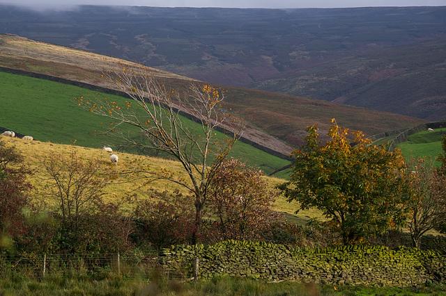 Autumn Views: Bray Clough
