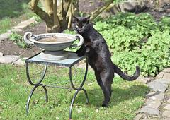 Oscar ! va boire ailleurs, ça c'est pour le bain des oiseaux !!!