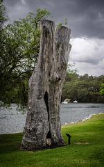 """The """"bushranger tree"""""""