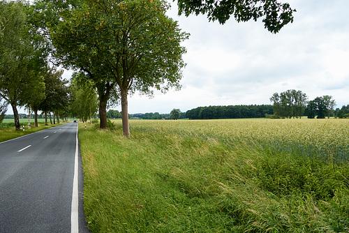 Auf Issendorf zu // -landstrasse-02963-co-25-06-17