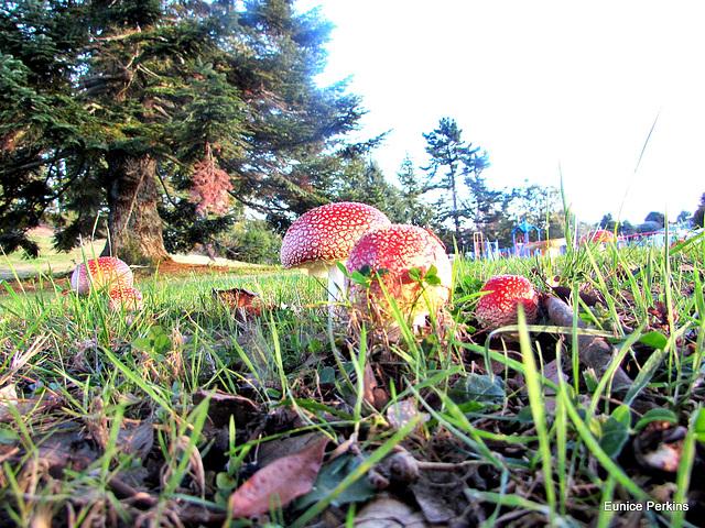 Fungi In Glenkill Park