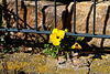 Mauerblümchen - Wallflowers - HFF