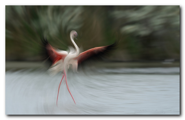 La danseuse flamande...