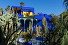 cactus in blue