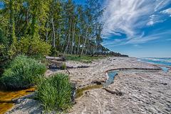 Birches & Beaches