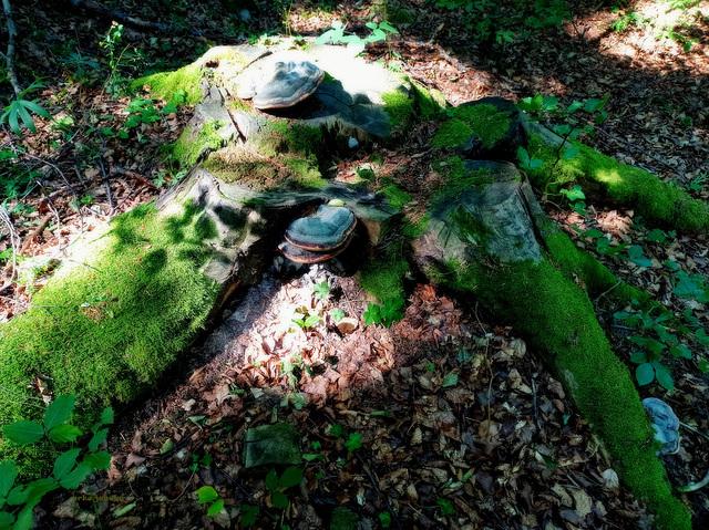 World Photography Day - Stump, mushrooms, moss...