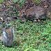 BunnyNSquirrel