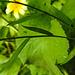 20210830 2627CPw [D~LIP] Blume, Bad Salzuflen