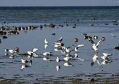 Sammelplatz auf dem Bodensee