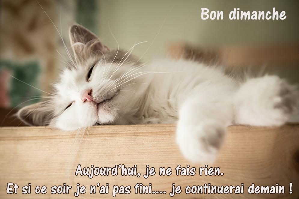 Portrait of sweet sleep white cat