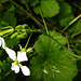 20210830 2629CPw [D~LIP] Blume, Bad Salzuflen