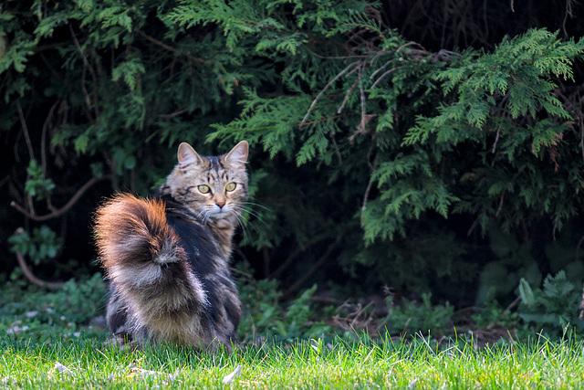 Un visiteur au fond du jardin.