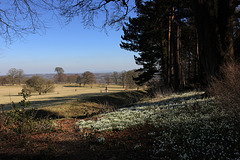 Snowdrops and shadows