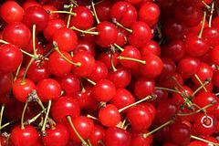 Confitures et compotes de cerises avec des fraises !