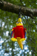 Wee Parrot up a Tree