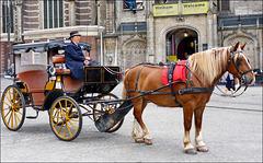 Amsterdam, una città pulita - (537)