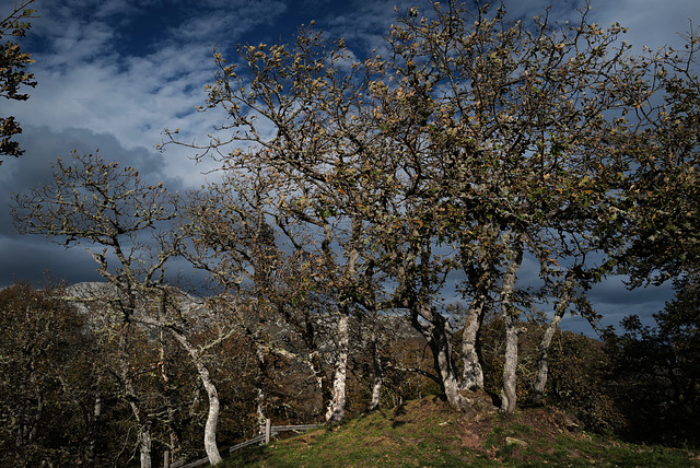 Picos de Europa, Mirador de Santa Catalina