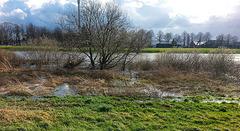 20150402 0013Hw [D~SHG] Weser, Hochwasser, Rinteln