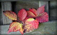 Letzte Herbsttöne
