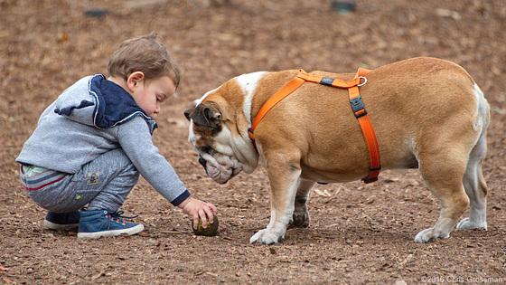 Bulldog and Boy - Nikon D750 - AFS Nikkor 28-300mm 1:3.5-5.6G VR