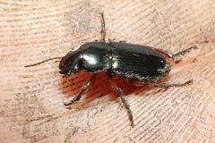 BeetleIMG 1010