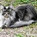 He's a beautiful cat, but very cheeky