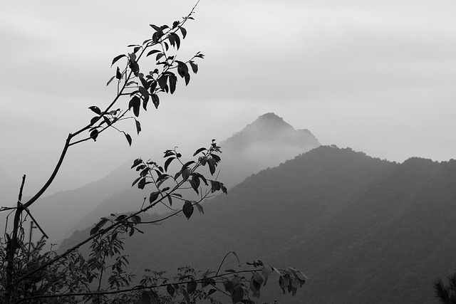 Baimashan  : Misty day