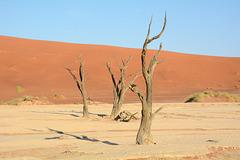 Namibia, Ancient Dried up Trees in Deadvlei