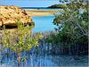 Sharm el Sheikh : Ras Mohammed - nelle acque del lago salato crescono le mangrovie